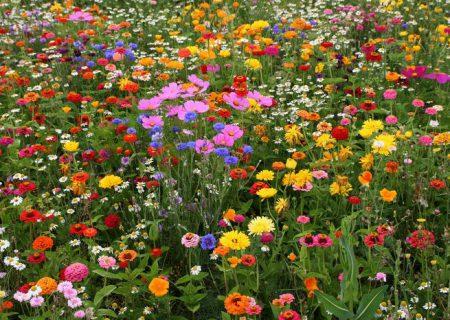 Поля и полевые цветы