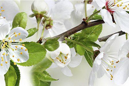 Ветки цветущие